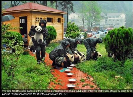 imagenes ositos panda