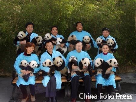 imagenes osos pandas bebes fotos bebés