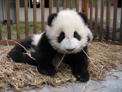 Fotografía osito panda