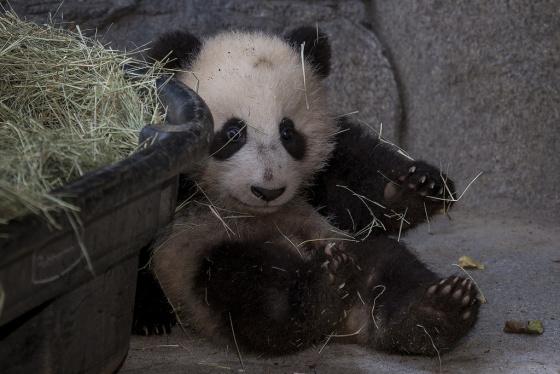 Imagen osito panda sucio