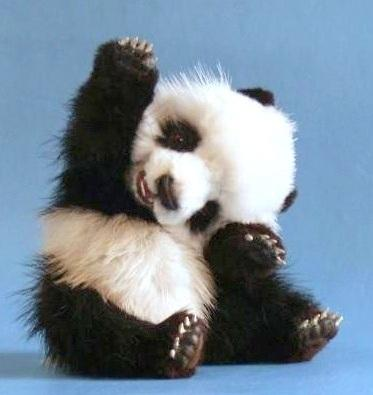 Fotografia tierna oso panda bebe