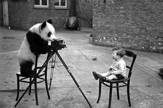 simpatica imagen de oso fotografiando a bebe