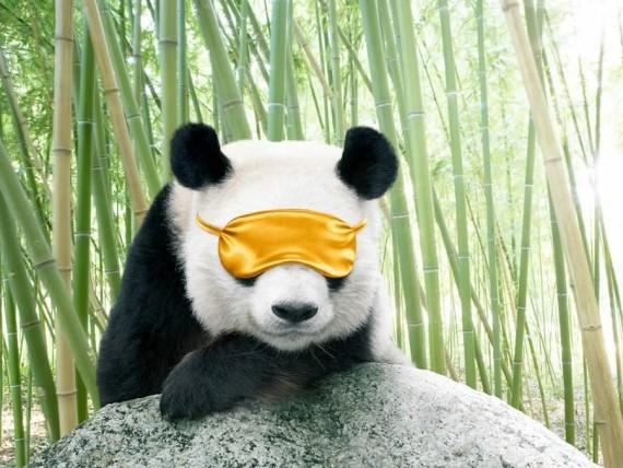 Tierna imagen de oso panda listo para una siesta
