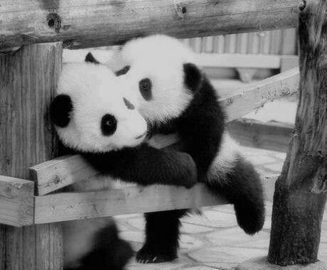 Imagen de osito panda conquistador