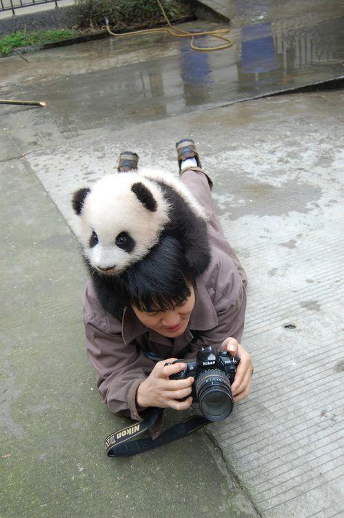 Imagen de oso panda jugueton