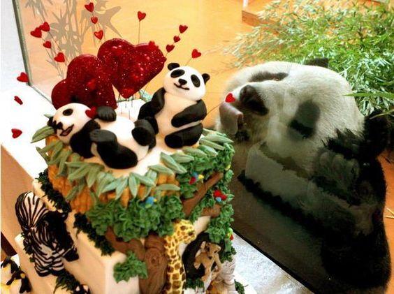 Tierna fotografia de oso panda mirando por la ventana